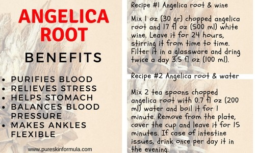 Angelica root recipes