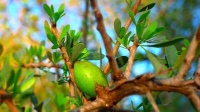 6 Essential Argan Oil Face Benefits! How to Use It Properly?